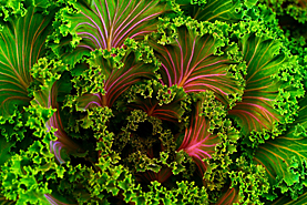 kale garnish picture